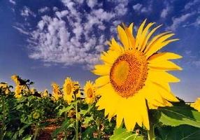 Agricoltura-biologica-un-valido-aiuto-contro-i-cambiamenti-climatici.jpg